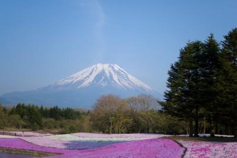 $オーラソーマ 総合情報サイト ブログ-富士芝桜