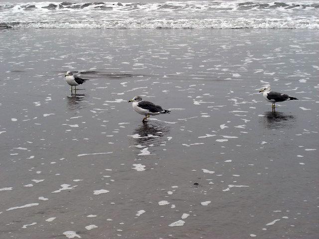 $オーラソーマ 総合情報サイト ブログ-秋の由比ヶ浜海岸・3
