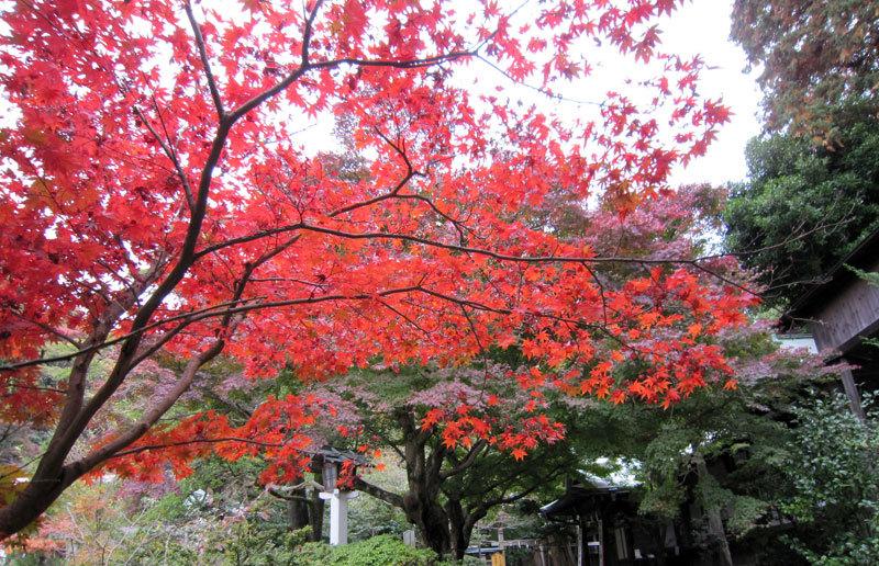 $オーラソーマ 総合情報サイト ブログ-鎌倉宮