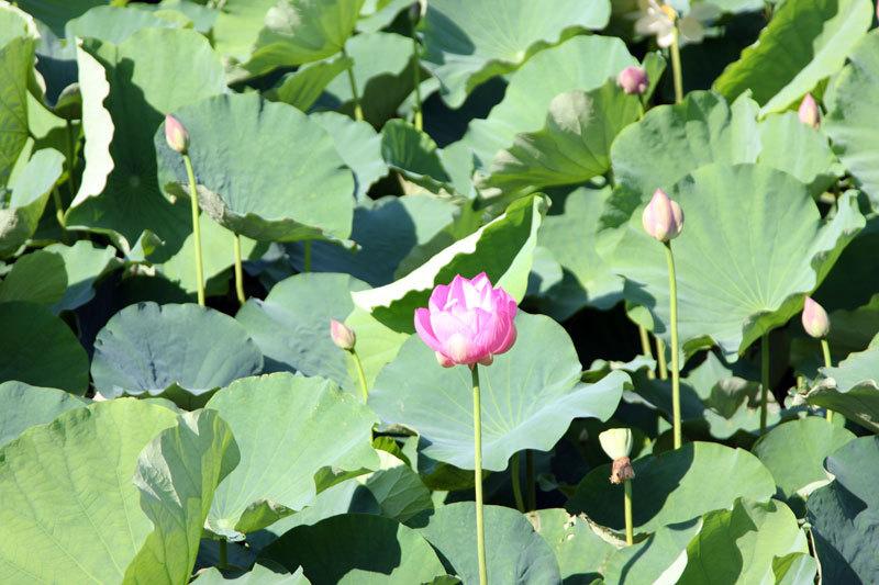 $オーラソーマ 総合情報サイト ブログ-鶴岡八幡宮・1