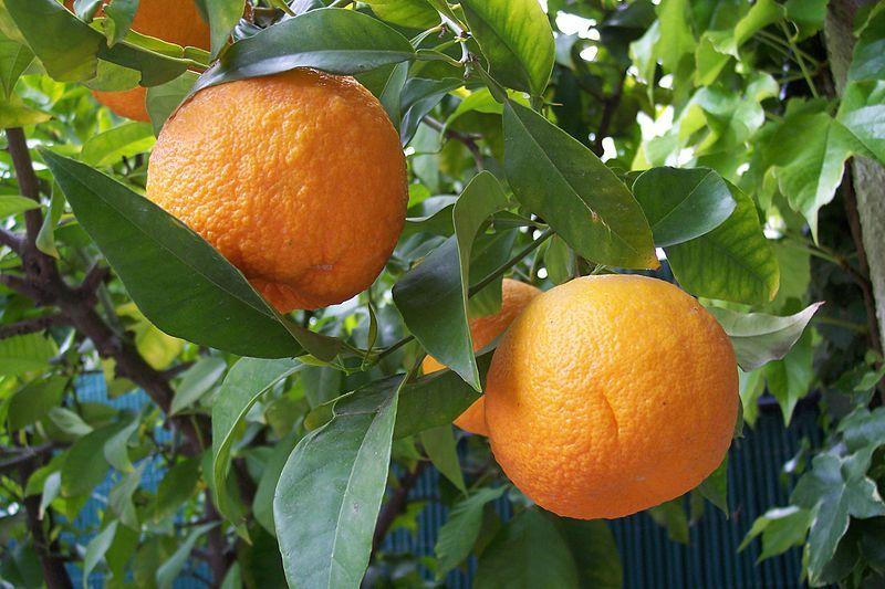 $オーラソーマ 総合情報サイト ブログ-橙