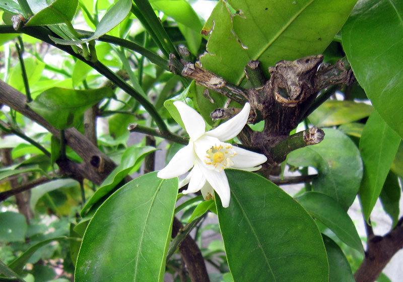 $オーラソーマ 総合情報サイト ブログ-白い花・5