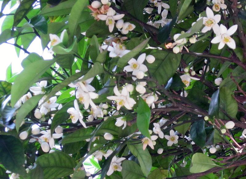 $オーラソーマ 総合情報サイト ブログ-白い花・4
