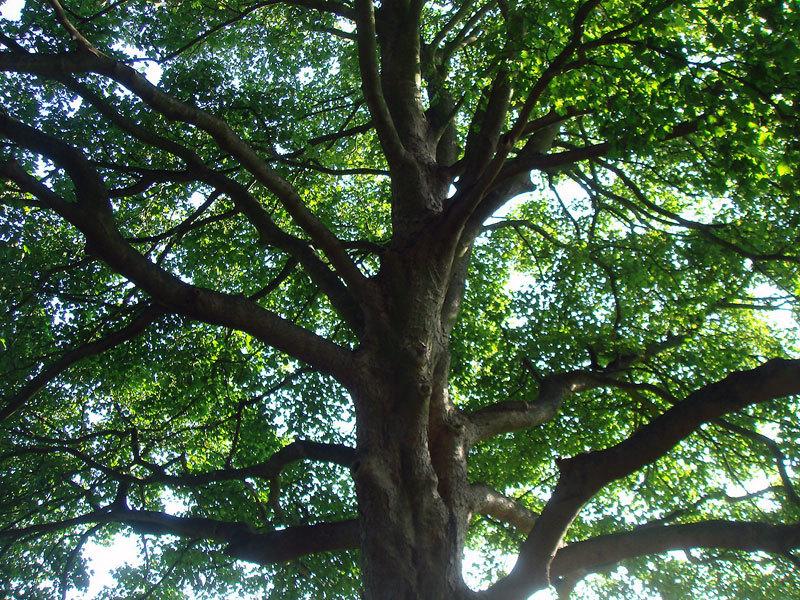 $オーラソーマ総合情報サイト・ブログ-ヴィッキーさんの木