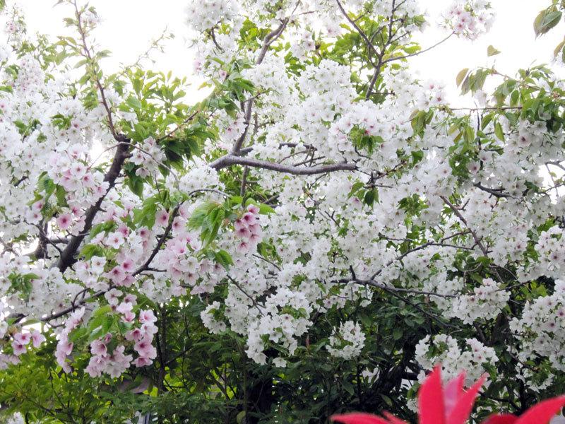 $オーラソーマ 総合情報サイト ブログ-春花・3