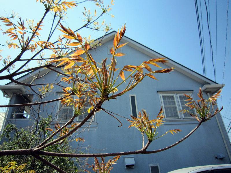 $オーラソーマ 総合情報サイト ブログ-ユニティ前の木