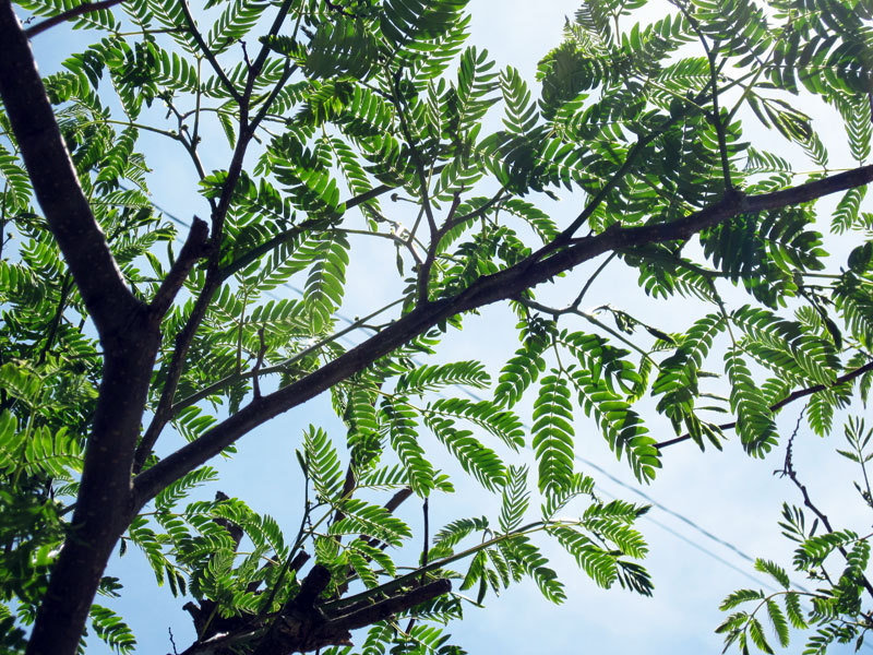 $オーラソーマ 総合情報サイト ブログ-合歓の木
