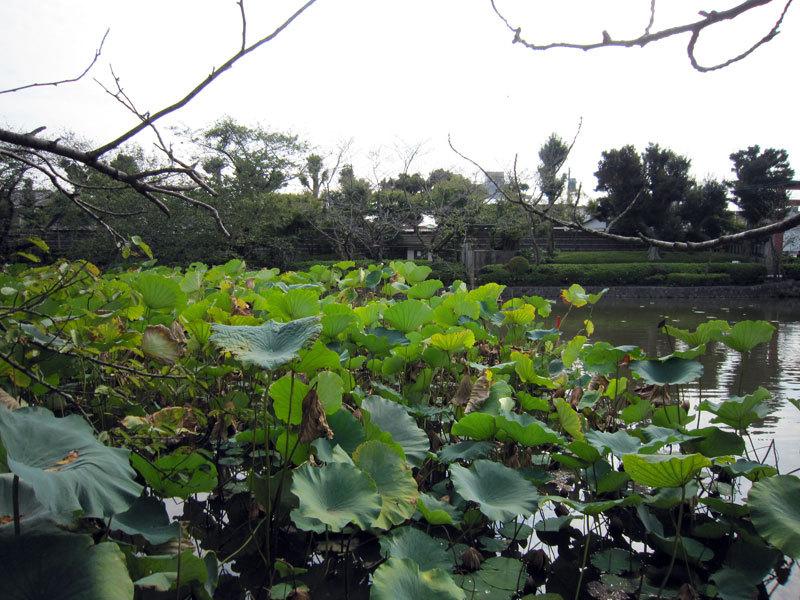 $オーラソーマ 総合情報サイト ブログ-八幡様巡り・4