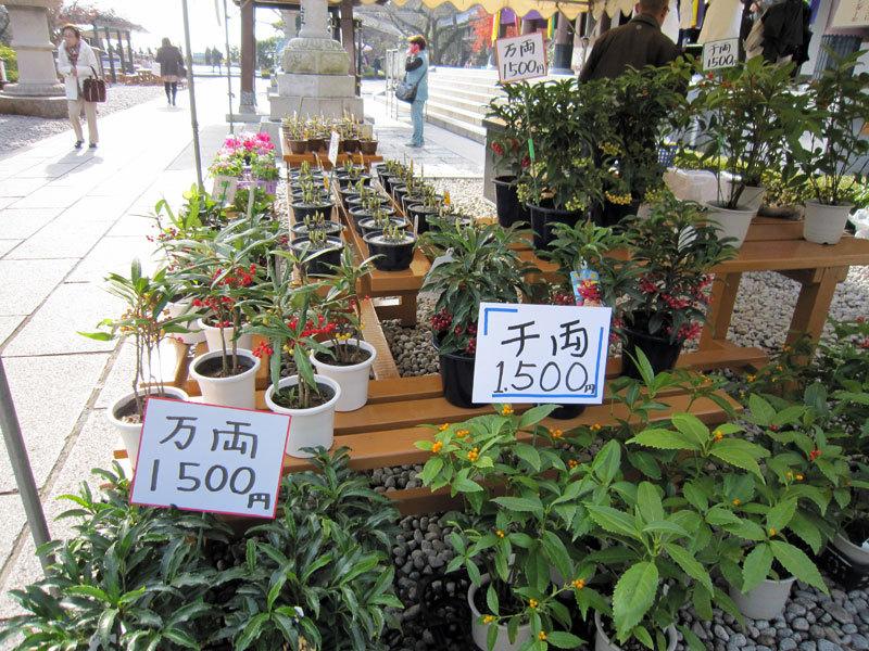 $オーラソーマ 総合情報サイト ブログ-長谷寺歳の市8