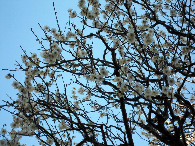 $オーラソーマ 総合情報サイト ブログ-春の花さがし2