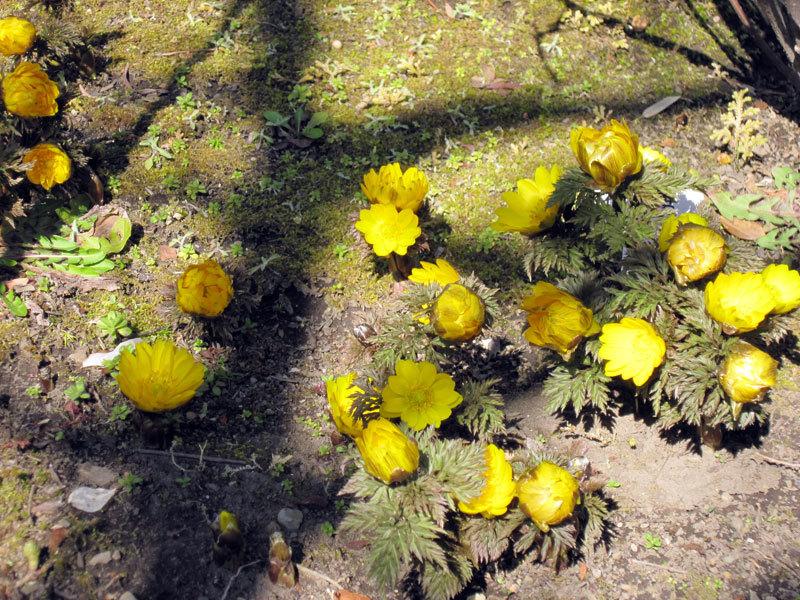 $オーラソーマ 総合情報サイト ブログ-春の花さがし3