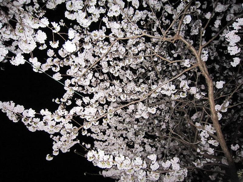 $オーラソーマ 総合情報サイト ブログ-春の花便り26