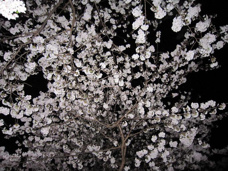 $オーラソーマ 総合情報サイト ブログ-春の花便り27