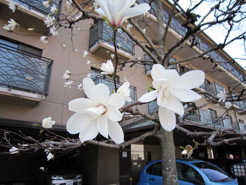 $オーラソーマ 総合情報サイト ブログ-春の花便り30