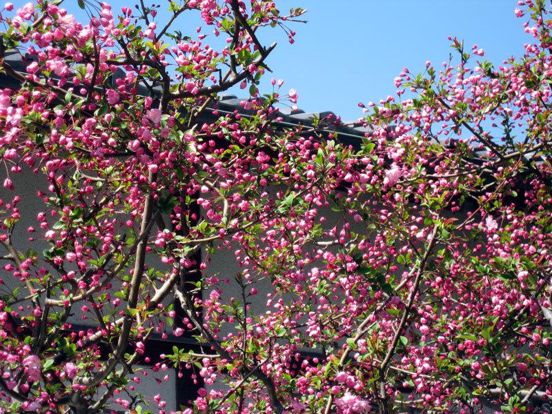 $オーラソーマ 総合情報サイト ブログ-春の花便り29