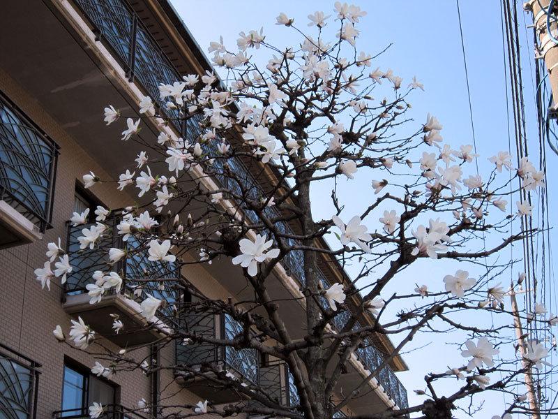 $オーラソーマ 総合情報サイト ブログ-春の花便り31