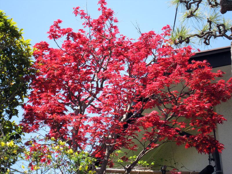 $オーラソーマ 総合情報サイト ブログ-春の花便り32
