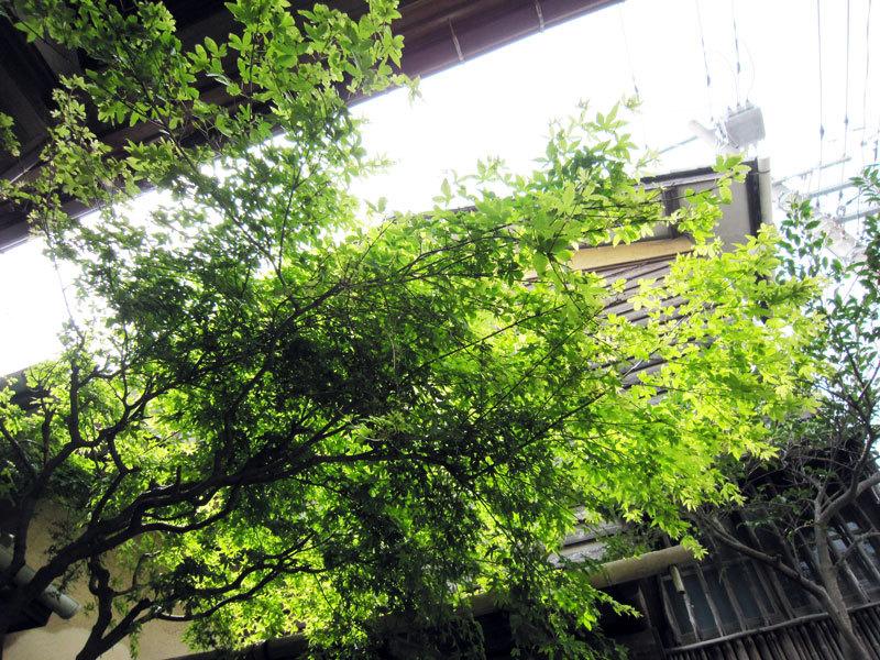 $オーラソーマ 総合情報サイト ブログ-春の花便り34