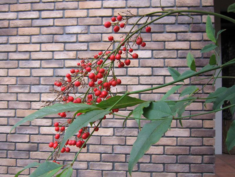$オーラソーマ 総合情報サイト ブログ-鎌倉の秋の植物・13