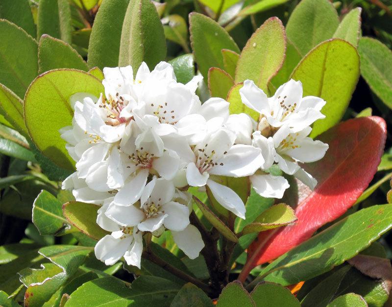 $オーラソーマ 総合情報サイト ブログ-白い花・3