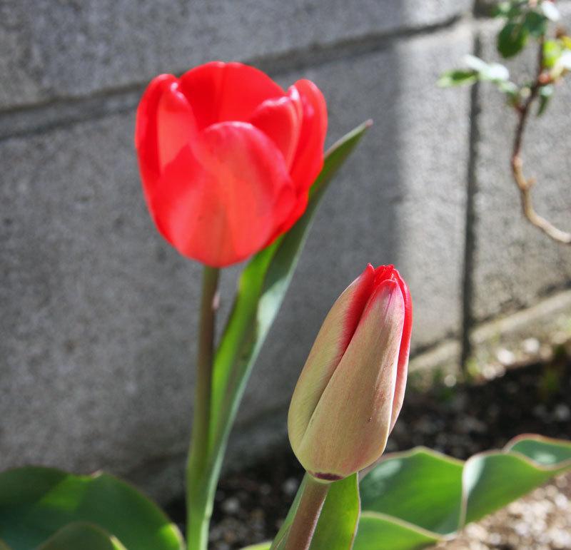 $オーラソーマ 総合情報サイト ブログ-春花・2